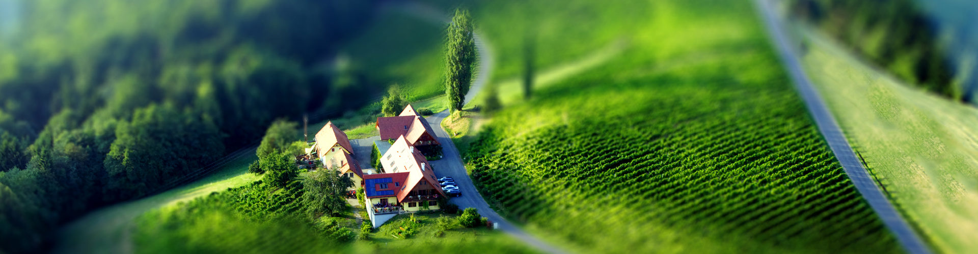 Weingut Winzerzimmer Rothschädl umgeben von Weingärten. Südsteirische Landschaft vom Helicopter aus fotografiert.