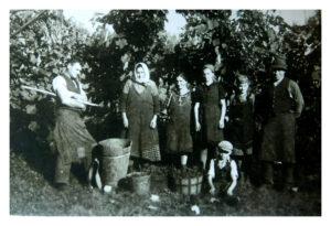 Traditions-Weingut-seit-1880-Weingarten-Arbeit-Lese-Familie-Weingut-Rothschaedl-alte-schwarz-weiss-Fotos
