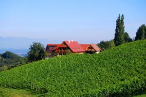 Weingut-Winzerzimmer-Zimmer-Unterkunft-Gaestezimmer-Suedsteiermark-Leutschach-Weinstrasse-Weingarten-Landschaft-Natur-Urlaub-Ferien-Wein-Weinberg-Kurzurlaub-Wochenende-Wandern